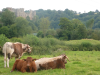 ludlow castle from corve street; accommodation in ludlow; self catering holiday cottage; things to do in ludlow; holiday let ludlow